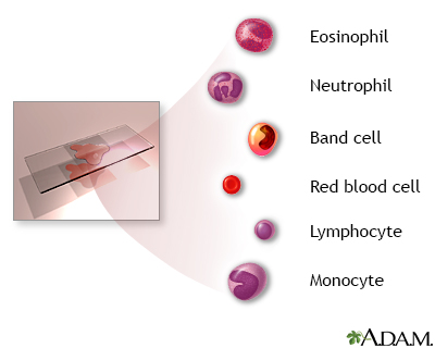 Complete blood count - series
