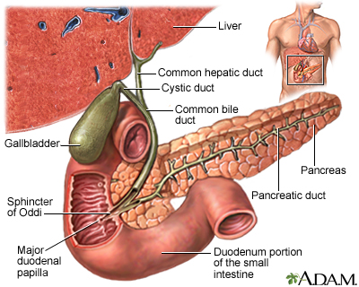 After Food Passes Through The Stomach It Enters This Organ