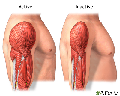 Active vs. inactive muscle